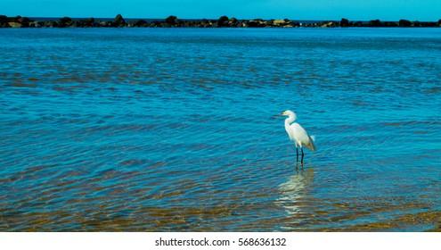 Beautiful Heron on the beach Sunrise – fishing