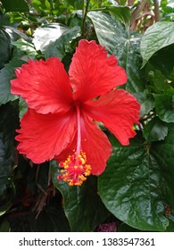 beautiful hibiscus fresh color garden flower