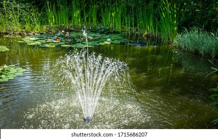 Beautiful high fountain in garden pond. Idyllic picture of green water, red fish and beautiful plants around pond. Sunny day and freshness of shade of tall trees near water.