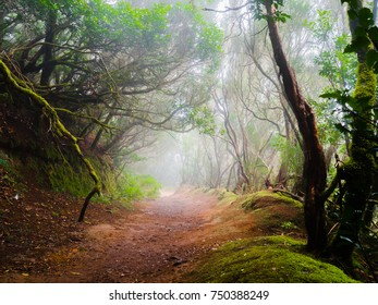 Beautiful hike trail in the protected foggy laurel forests of Anaga Rural Park in the island of Tenerife, Canary Islands, Spain.