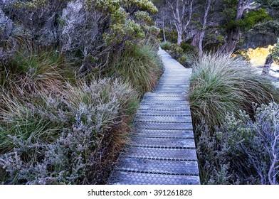 Beautiful hiking path along wild alpine vegetation in Cradle mountain National Park, Tasmania, Australia. Hiking, bush walking in wilderness scene