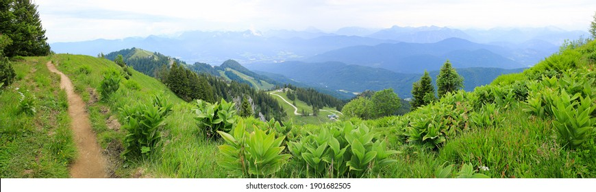 beautiful hiking trail at Brauneck mountain ridge, green bavarian landscape in the alps with gentian plants