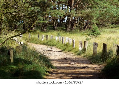 Beautiful hiking way of the Darsser Rundwanderweg with a trail through white dunes, pine forest, marsh land, a natural harbor etc.