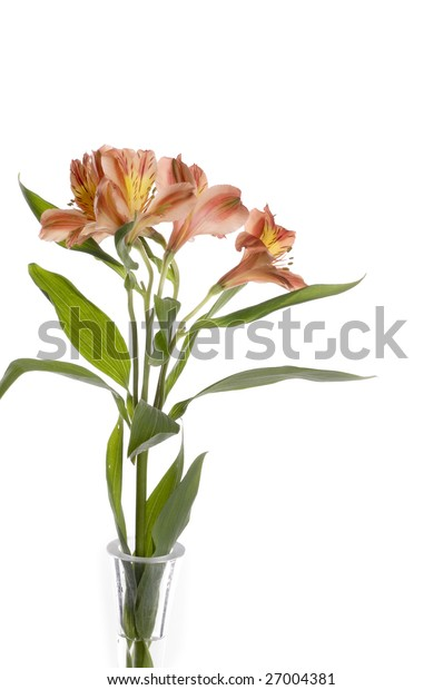 Beautiful holiday flowers over white background