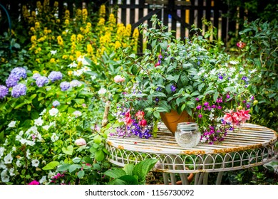 Beautiful home garden with lots of blooming flowers, plants and garden table