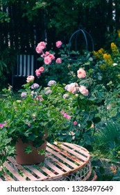 Beautiful, home garden with white garden table and blooming roses