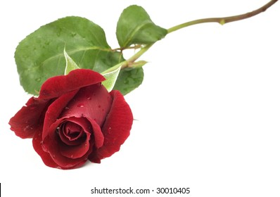 A beautiful home grown long stem red rose isolated on white background, great for Valentine's Day