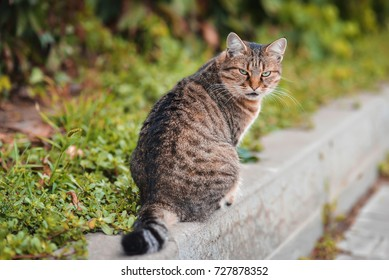A beautiful homeless cat with a brownish black coloring and green eyes sits on the curb near the road.