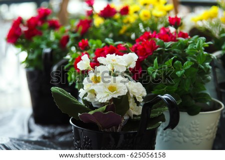 Beautiful homemade flowers in pots stand on a table in the street & Beautiful Homemade Flowers Pots Stand On Stock Photo (Edit Now ...