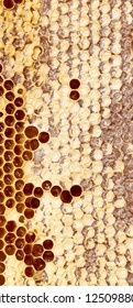 Beautiful honey filled and closed honeycombs, wholesome natural food