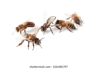 Beautiful honeybees on white background. Domesticated insects