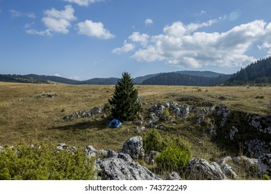 Beautiful horizon on a rocky hill with a small blue camping tent under the pine tree during sunny day