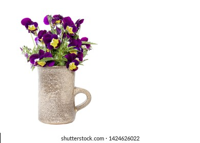 Beautiful Horned Violet (viola Cornuta) isolated on a white background.