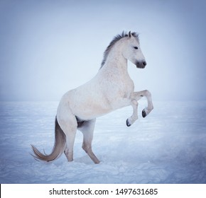 Beautiful horse action portrait in snow