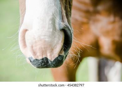 Beautiful horse background.