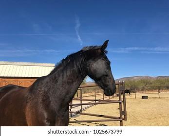 Beautiful horse blue sky ranch