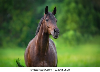 Beautiful horse close up portrait in spring green landscape