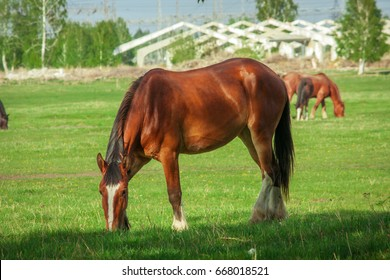 Beautiful horse is eating grass in the field.