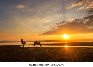 Beautiful horse eating grass on beside river at sunset