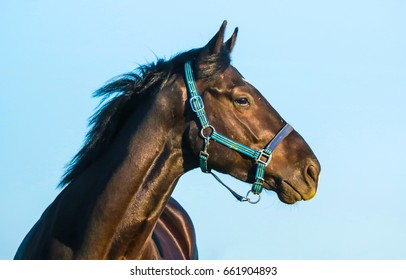 Beautiful horse eye. Horse profile