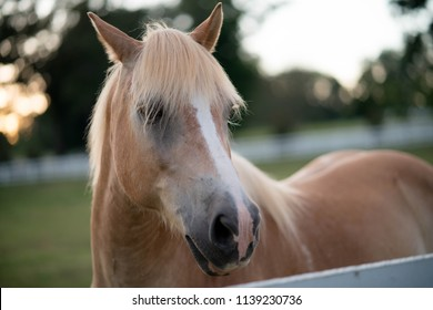 Beautiful horse in field
