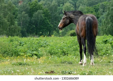 Beautiful horse in a green field near the forest