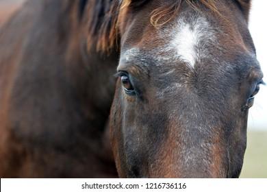 Beautiful horse head