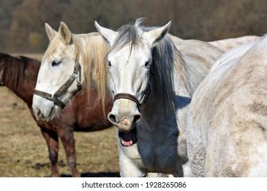 Beautiful horse head in spring