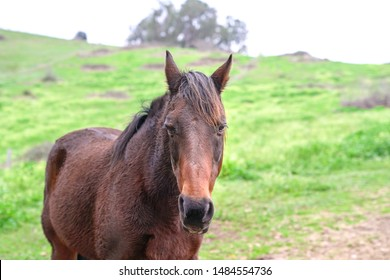 Beautiful horse headshot. Green meadow background.
