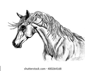 Beautiful horse illustration with creative unusual mane. Hand Drawn by pen. Close-up portrait
