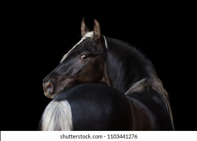 Beautiful horse look back isolated on black background