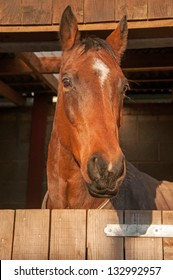Beautiful horse looking out, over his stable door