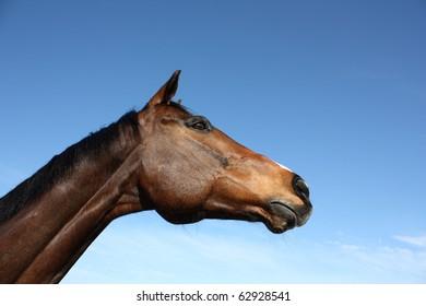 Beautiful horse looking at something.