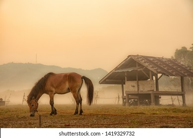 Beautiful horse in the morning