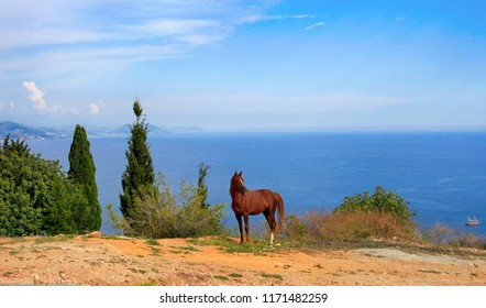 Beautiful horse on the background of the sea