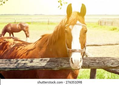 Beautiful horse on farm