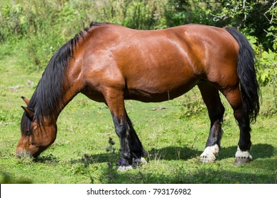 Beautiful horse on grass