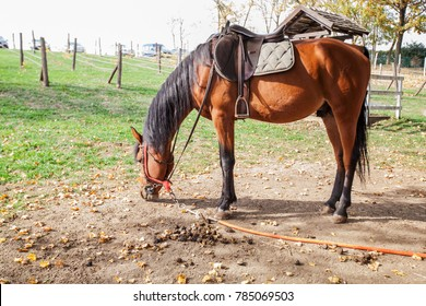 Beautiful Horse on rural farm at autumn day