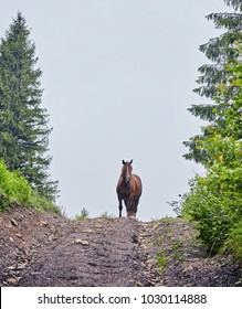 Beautiful horse on a summer mountain pasture