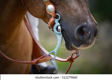 Beautiful horse outdoor on meadow. Western riding horse from farm. Horse with interesting color. Lovely and cute horse.  Animal shot capturing horse.