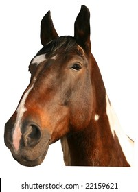 beautiful horse poland - portrait tiff isolated
