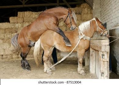 Beautiful horse, pony trek