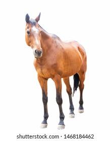 beautiful horse, racehorse, english racehorse