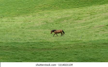 Beautiful horse at a horse ranch on Kohala, Big Island of Hawaii