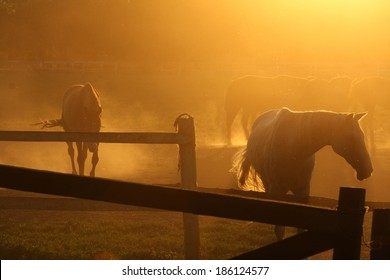 Beautiful horse ranch with sunset