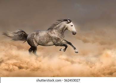 Beautiful horse run gallop in dust