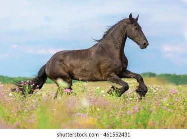 Beautiful horse running among spring flowers.