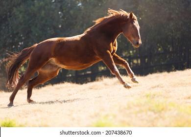 beautiful horse running on the field