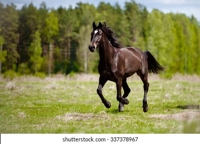 beautiful horse running outdoors