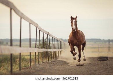 beautiful horse running in the stable
